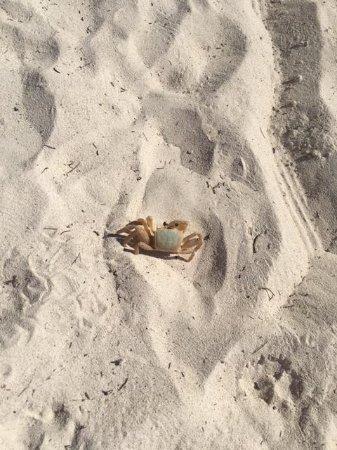 Bayahibe, Dominican Republic: crabe