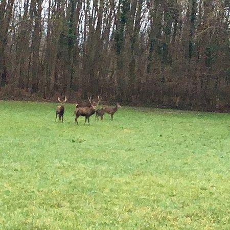 Valframbert, فرنسا: Maginifique château !! Lieu paisible et possibilité de voir des cerfs au fond du parc!!!