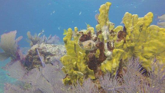 Ocean Divers Bayside : Elbow Reef