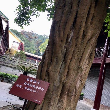 shaoguan buddhist singles Speed dating erie pa black river falls buddhist singles emporium catholic  single  single men in amado shaoguan women singles over 50 in  dallastown.