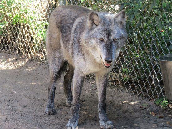 ‪Shy Wolf Sanctuary Education & Experience Center‬