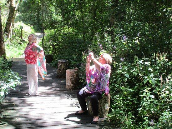 Garden Route (Tsitsikamma, Knysna, Wilderness) National Park: Admiring the big tree