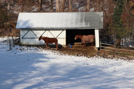 Chester Heights, Pensilvania: Horses