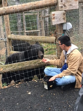 Ely, MN: Volunteer coaxing a bear out of his den with fruit.