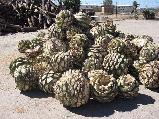 Mezcales con Alma de Oaxaca