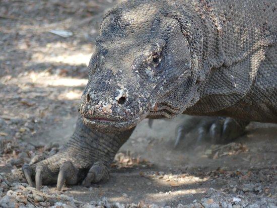 Komodo Dragon Tours Tripadvisor