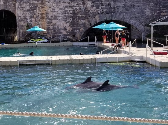 Dolphin Quest: 20171224_112427_large.jpg