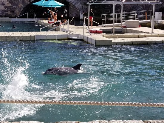 Dolphin Quest: 20171224_112248_large.jpg