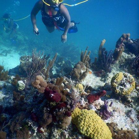 SNUBA Turks and Caicos: photo0.jpg