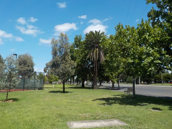 Clifton Hill, Австралия: Grass and Palm Trees