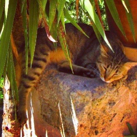 Cas Concos, Ισπανία: entspannte Hauskatze Juanito