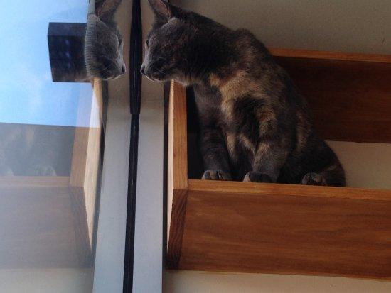 Hobart Cat Cafe: Dusty