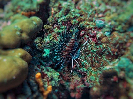 Aqua Vision Scuba Diving: IMG-20171224-WA0002_large.jpg