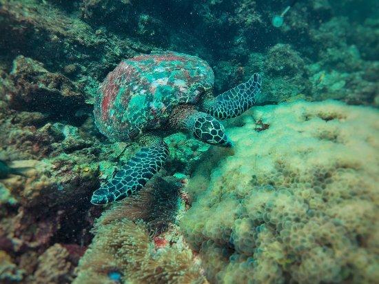 Aqua Vision Scuba Diving: IMG-20171224-WA0001_large.jpg