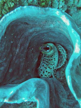 Aqua Vision Scuba Diving: IMG-20171225-WA0007_large.jpg