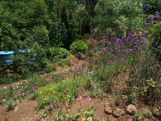 Img 20171223 121337 foto di le jardin parque for Villas de jardin seychelles tripadvisor