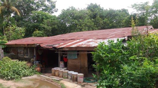 Ubon Ratchathani Province, Thái Lan: Maison typique de la campagne d'Ubon