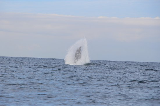 Whale Watching Photo Safari by Vallarta Adventures: There was plenty of fin slapping going on.