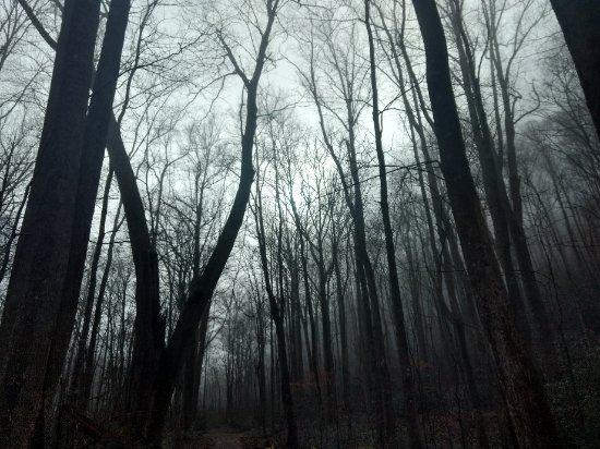 Wyndham Smoky Mountains: IMG_20171224_111822591_HDR_large.jpg