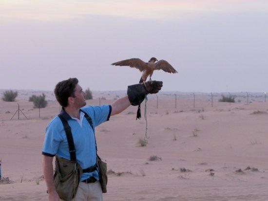 Desert Safari Dubai Adventures , Falcon photography - Picture of