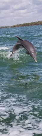 Everglades Area Tours: Lots of shells, knowledgeable staff & lots of dolphins.