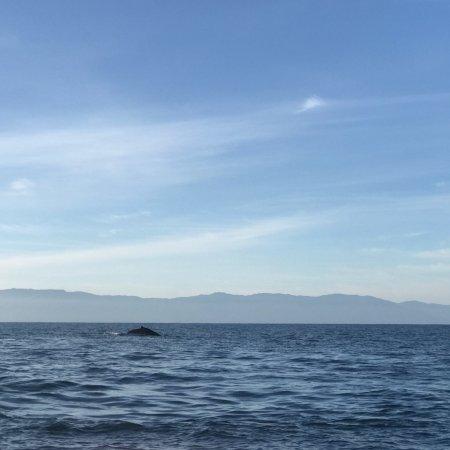 Whale Watching Photo Safari by Vallarta Adventures: photo0.jpg