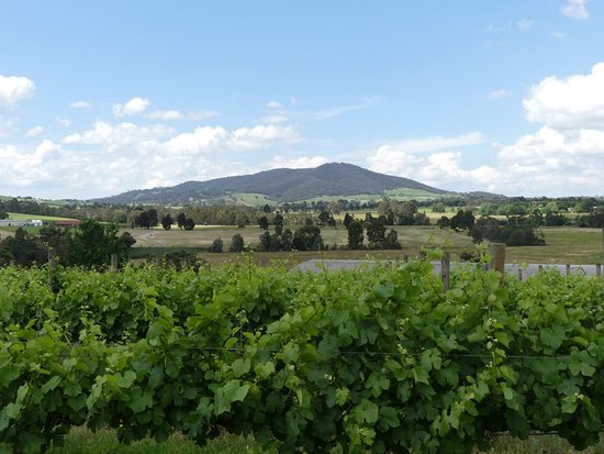 Coldstream, Australia: View from Badgers Brook Winery.