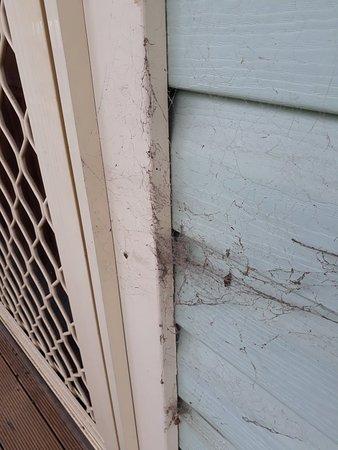 Vineyard, Australia: Spiderwebs everywhere!