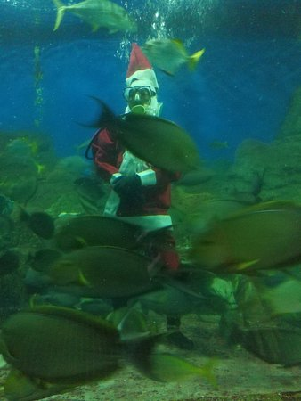 Underwater World Pattaya Bang Lamung What To Know Before You - 6 amazing underwater attractions