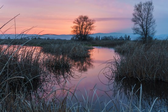 Willows, CA: Reflections on the wetlands