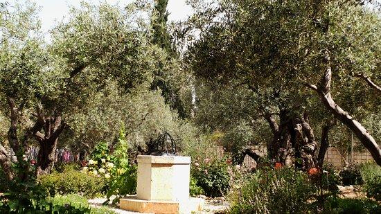 Altar Im Garten - Picture Of Garden Of Gethsemane, Jerusalem