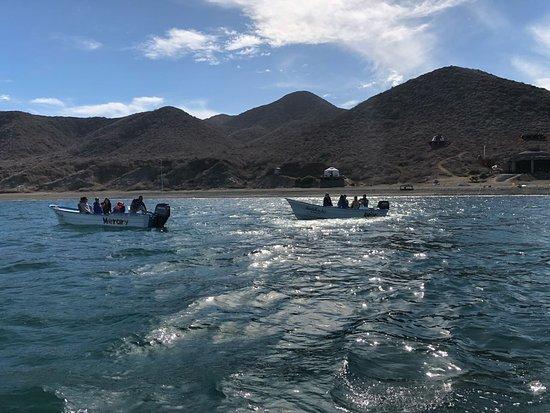 Puerto San Carlos, Mexico: En búsqueda de ballenas desde el campamento.