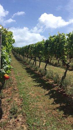 Waiheke Adası, Yeni Zelanda: Small Winery