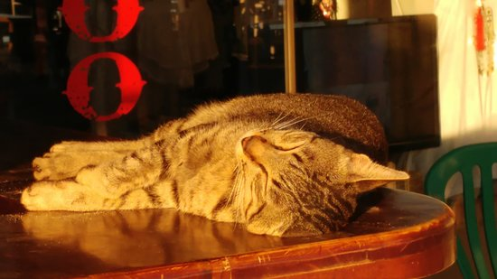 Bale Sampan Bungalows: A cat still asleep in the vicinity