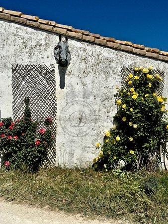 Mas de Calabrun in Saintes-Maries-de-la-Mer, France: deciccophoto.com