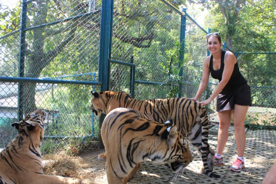 Tiger Kingdom - Chiang Mai: Picture with 3 tiger
