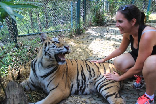 Tiger Kingdom - Chiang Mai: Don't be afraid !!