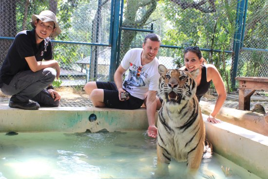 Tiger Kingdom - Chiang Mai: Bath time !