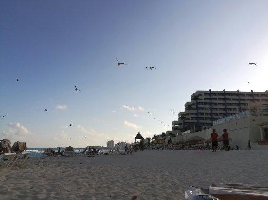 Crown Paradise Club Cancun: IMG_20171221_165728_1_large.jpg