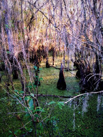 Lettuce Lake Regional Park: The boardwalk takes you deep into the swamp