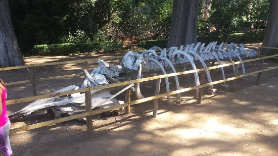 Parque Pedro del Rio Zanartu: Ossada exposta