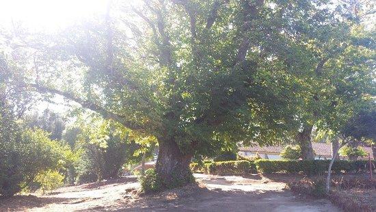 Parque Pedro del Rio Zanartu: Jardin do parque