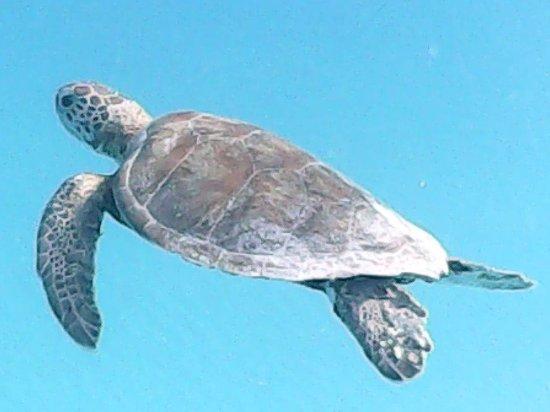 Nautilus Beach Apartments: morning swim companions