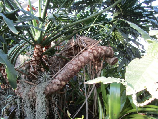Highland Botanical Park And Lamberton Conservatory A Plant With Eyes