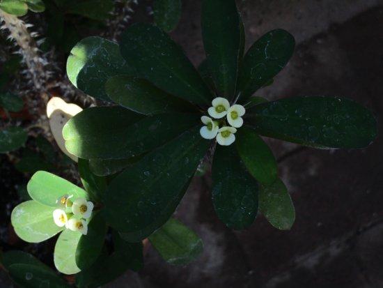 Highland Botanical Park And Lamberton Conservatory Tiny Flowers