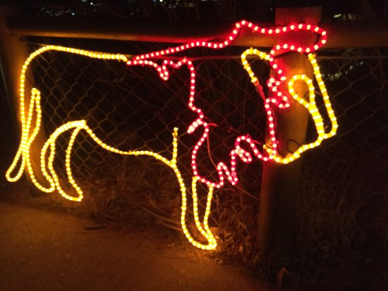 Christmas Lights Display Picture Of Cheyenne Mountain Zoo