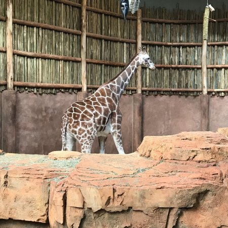 Lincoln Park Zoo Chicago All You Need To Know Before You Go - 10 awesome zoos where you can spend the night