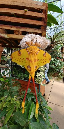 Magic Wings Butterfly Conservatory and Gardens: 20171226_121921_HDR_large.jpg