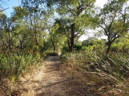 Wonnerup, Australia: 20171217_064120_large.jpg