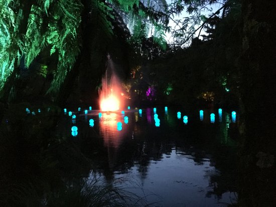 Pukekura Park: Floating fairy lights at the entrance to the park